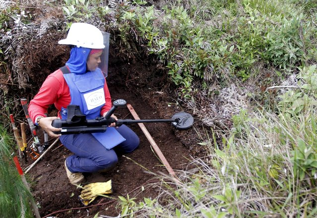 Aleida Toro works with her mine detector in a zone where landmines were planted by rebel groups near Sonson in Antioquia province, November 19, 2015. (Photo by Fredy Builes/Reuters)