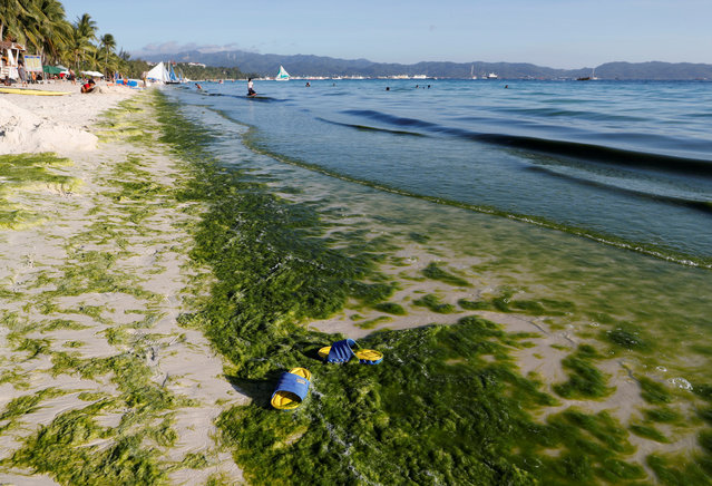 A view of a seashore partly covered with moss is seen at Boracay in the Philippines April 23, 2018. Tourists and non-residents will be denied entry and boats will be barred from going within 1.8 miles of the island. (Photo by Erik De Castro/Reuters)