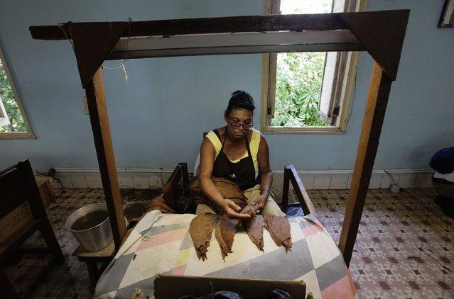 "A woman sorts tobacco leaves at the Cohiba cigar factory ""El Laguito"" in Havana September 10, 2012. (Photo by Desmond Boylan/Reuters)"