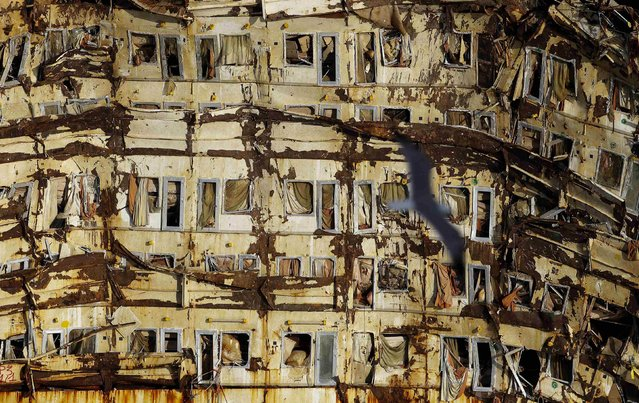 """A seagull flies past the side of the cruise liner Costa Concordia during the """"parbuckling"""" operation outside Giglio harbour in this January 12, 2014 file photo. (Photo by Max Rossi/Reuters)"""