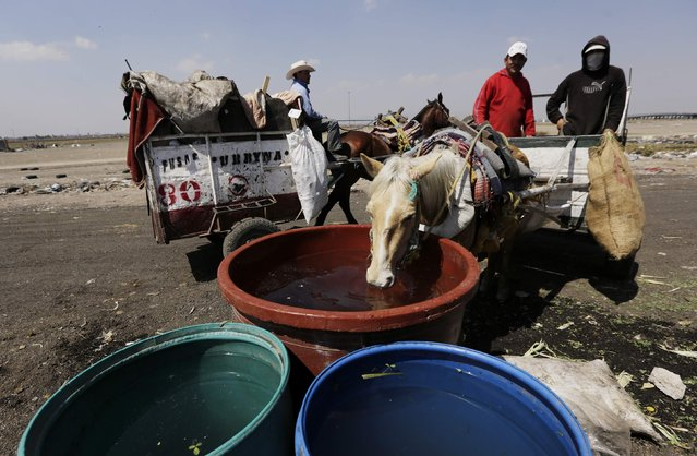 Garbage collectors let their horse drink, before unloading rubbish from their cart, at the municipal dump in Nezahualcoyotl, on the outskirts of Mexico City, February 18, 2015. (Photo by Henry Romero/Reuters)