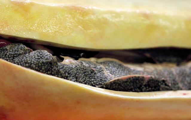 "Eggs are pictured inside a dead female sturgeon at the caviar fish farming company ""Sturgeon"", the leading French producer, in Saint-Genis-de-Saintonge, France, November 8, 2016. (Photo by Regis Duvignau/Reuters)"
