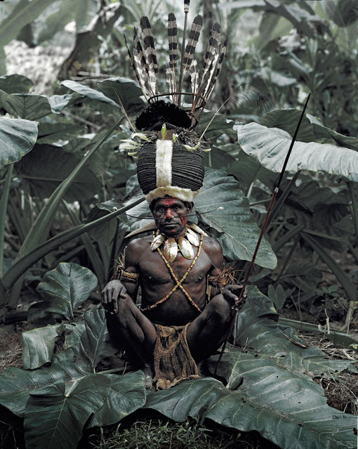 The crowns of the head-dresses are decorated with bird feathers comprising those of the cockatoo, parrots, lorikeets and bird of paradise species. Small round kina shells are hooked on to and hang suspended from the hole in the nose while others insert King of Saxony bird of paradise feathers. (Jimmy Nelson)