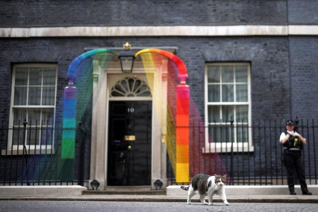 Larry the cat is seen next to a rainbow arch by Artists Louisa Loizeau and Hattie Newman that has been installed over the door at Number 10 Downing Street to mark Pride month, in London, Britain, June 29, 2021. (Photo by Henry Nicholls/Reuters)