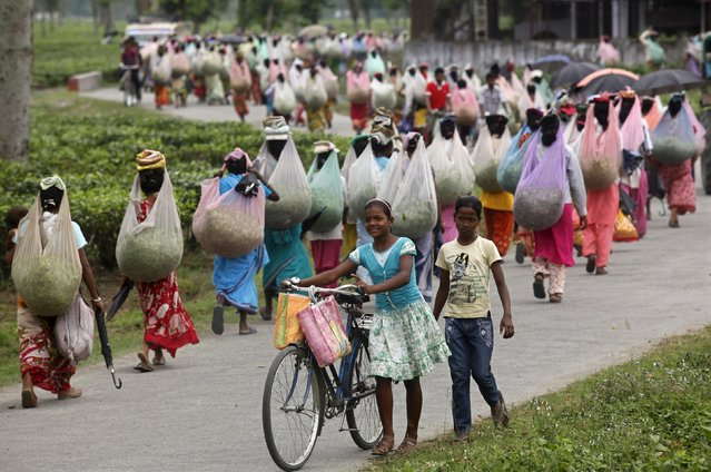 Workers carrying tea leaves walk back to their factory after a day's work at a tea garden estate on the outskirts of the northeastern Indian city of Siliguri in this May 11, 2013 file photo. (Photo by Rupak De Chowdhuri/Reuters)