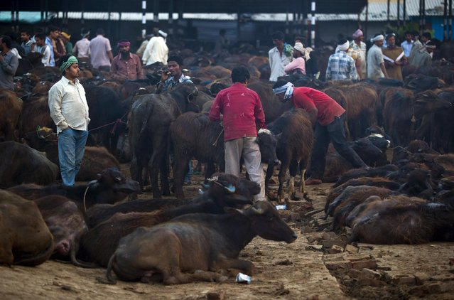 In this April 2, 2015 photo, traders buy and sell buffaloes at Ghazipur slaughterhouse complex in New Delhi, India. India is the world's second-largest exporter of beef, but with the victory of Prime Minister Narendra Modi's Hindu nationalist Bharatiya Janata Party last year, the industry is facing tougher bans on slaughter. (Photo by Saurabh Das/AP Photo)