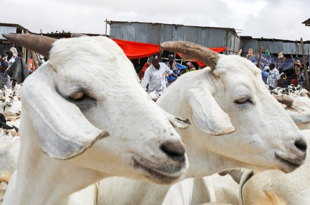 Sacrificial animals are seen at a livestock market ahead of the Muslim festival of sacrifice Eid al-Adha in Dayniile district of Mogadishu, Somalia, July 19, 2021. (Photo by Feisal Omar/Reuters)
