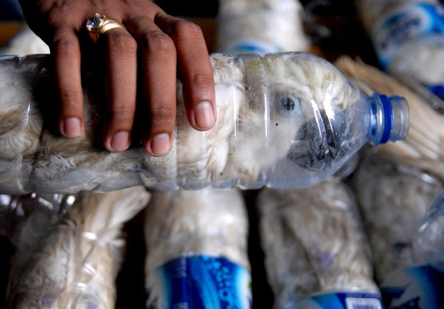 A policeman holds a water bottle with a yellow-crested cockatoo put inside for illegal trade, at the customs office of Tanjung Perak port in Surabaya, East Java province, Indonesia, May 4, 2015  in this picture taken by Antara Foto. (Photo by Risyal Hidayat/Reuters/Antara Foto)