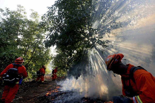 A prison crew battles a fire in an avocado grove outside Fallbrook, California May 14, 2014. More than 20 structures, including several homes, burned to the ground and thousands of people were ordered to evacuate on Wednesday, as a wind-lashed wildfire roared out of control in the heart of a Southern California coastal community. (Photo by Sandy Huffaker/Reuters)
