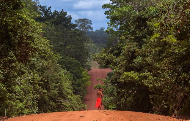 A Waiapi man walks on the road in the Waiapi indigenous reserve in Amapa state in Brazil on October 15, 2017. Tribal chieftain Tzako Waiapi perfectly remembers the day almost half a century ago when his hunting party stumbled across a group of white adventurers in the Amazon rainforest. Within months, nearly everyone in his entire tribe had died from disease. (Photo by Apu Gomes/AFP Photo)