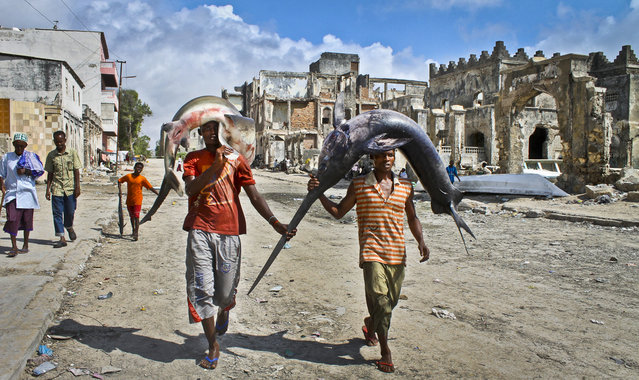 Somalis carry a swordfish and a shark on their heads from the ocean to the market in Mogadishu, Somalia  October 25, 2012. (Photo by Farah Abdi Warsameh)