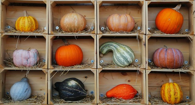 Pumpkins and gourds of various colors and sizes are displayed on a wall at Wilson Farm in Lexington, Massachusetts, on October 7, 2014. (Photo by Brian Snyder/Reuters)