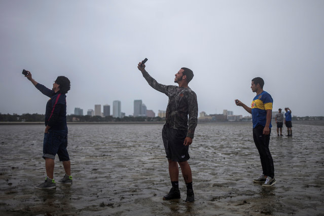The Tampa skyline is seen in the background as local residents (L-R) Rony Ordonez, Jean Dejesus and Henry Gallego take photographs after walking into Hillsborough Bay ahead of Hurricane Irma in Tampa, Florida, September 10, 2017. (Photo by Adrees Latif/Reuters)