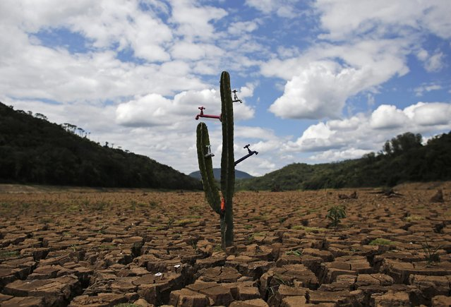 "A drought-related cactus installation called ""Desert of Cantareira"" by Brazilian artist and activist Mundano is seen at Atibainha dam, part of the Cantareira reservoir, during a drought in Nazare Paulista, Sao Paulo December 2, 2014. Sao Paulo, Brazil's drought-hit megacity of 20 million, has about two months of guaranteed water supply remaining as it taps into the second of three emergency reserves, officials say. (Photo by Nacho Doce/Reuters)"
