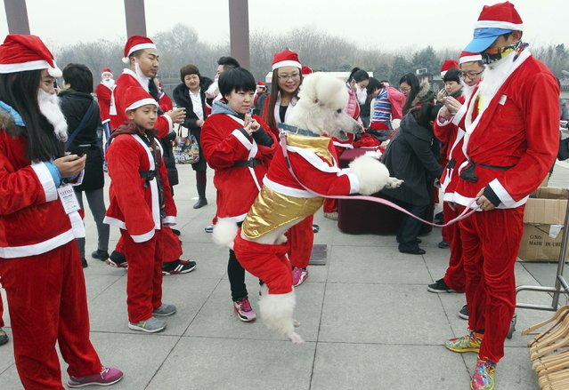 A dog jumps as participants dressed in Santa Claus costumes attend a charity running event to raise money and awareness for autism patients, in Xi'an, Shaanxi province December 6, 2014. A total of 150 volunteers took part in the charity event on Saturday wearing Santa costumes to celebrate the upcoming Christmas, local media reported. (Photo by Reuters/Stringer)
