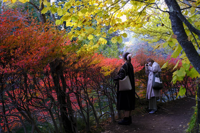 People wearing face masks to help curb the spread of the coronavirus take pictures while walking along a path as the trees begin to change fall foliage colors Monday, October 26, 2020, in Nagano, northwest of Tokyo, Japan. (Photo by Kiichiro Sato/AP Photo)