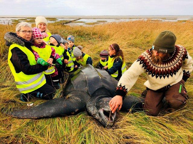 Children gather around a giant leatherback turtle that they found on a seashore in southern Jutland, Denmark on November 3, 2020. (Photo by Ritzau Scanpix via Reuters)