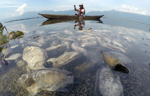 A fisherman paddles a wooden boat as dead fish are seen at Maninjau lake in Agam regency, West Sumatra province, February 5, 2021. (Foto by Iggoy el Fitra/Antara Foto via Reuters)