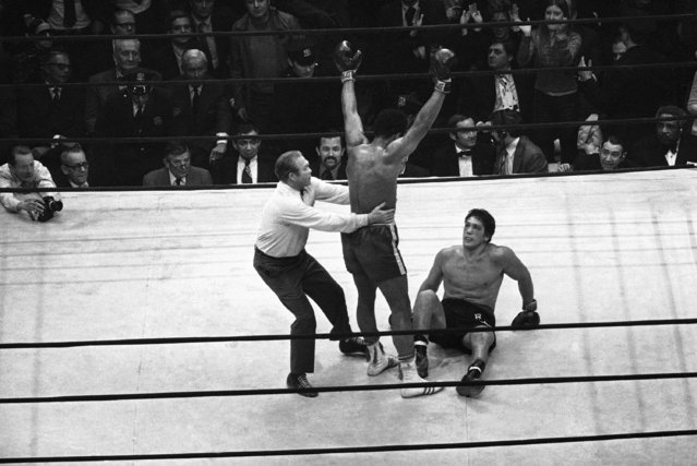 "Muhammad Ali ""Cassius Clay"" raises his hands triumphantly after dropping Oscar Bonavena for second time in 15th round of garden bout in New York on Monday, December 7, 1970. Referee Mark Conn tries to pull him away to neutral corner. (Photo by AP Photo)"