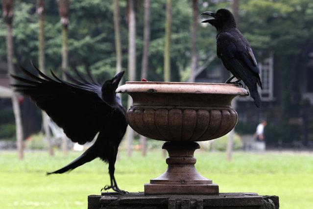 Crows stop at a water jar in a Tokyo park, Tuesday, July 30, 2013. (Photo by Shizuo Kambayashi/AP Photo)