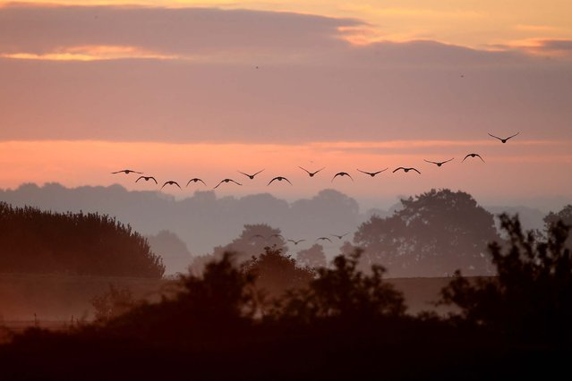 Pink-footed geese fly over the reserve at sunrise. (Photo by Dan Kitwood/Getty Images via The Palm Beach Post)