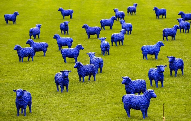 """The art project """"Blue Peace Flock"""" by artists Rainer Bonk and Bertamaria Reetz is on display in Hamburg-Wilhelmsburg, on September 20, 2013. The installation of 100 blue sheep sculptures symbolizing that everyone is equal and everybody is important. (Photo by Fabian Bimmer/Reuters)"""
