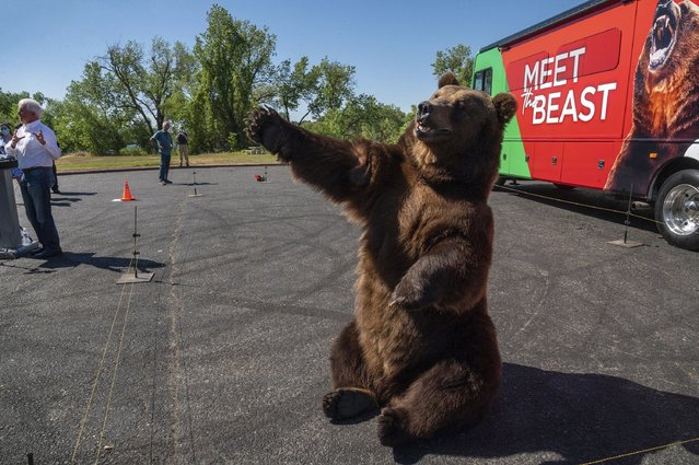 """John Cox, far left, begins his recall campaign for California governor with """"Tag"""", a Kodiak brown bear, on Tuesday, May 4, 2021 in Sacramento. It was the first stop for his """"Meet the Beast"""" bus tour. (Photo by Renee C. Byer/The Sacramento Bee via AP Photo)"""