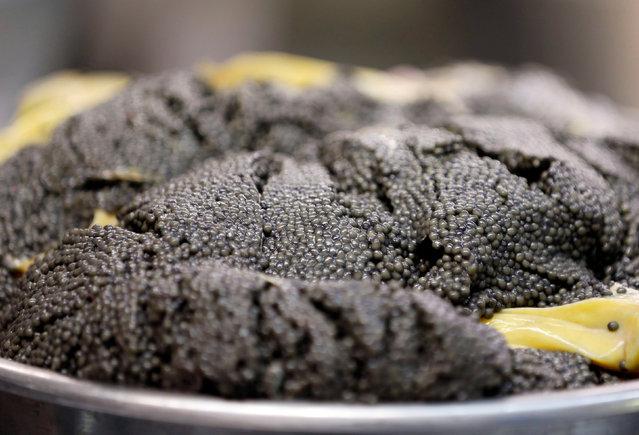 "Eggs are seen at the caviar fish farming company ""Sturgeon"", the leading French producer, in Saint-Genis-de-Saintonge, France, November 8, 2016. (Photo by Regis Duvignau/Reuters)"