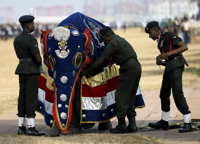Army soldiers prepare a military elephant for the parade during a rehearsal for Sri Lanka's 68th Independence day celebrations in Colombo, February 2, 2016. (Photo by Dinuka Liyanawatte/Reuters)