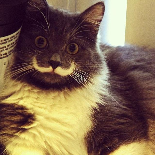 Meet Hamilton the Hipster Cat