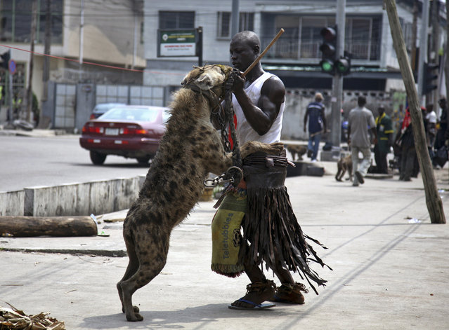 A man poses with a hyena along a street in Lagos, Nigeria November 4, 2008. (Photo by Akintunde Akinleye/Reuters)