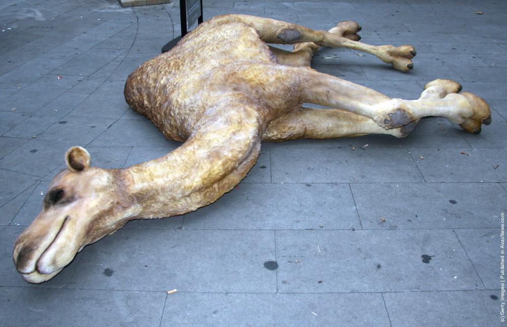 Replica Of Bear Grylls' Former Camel Carcass Residence