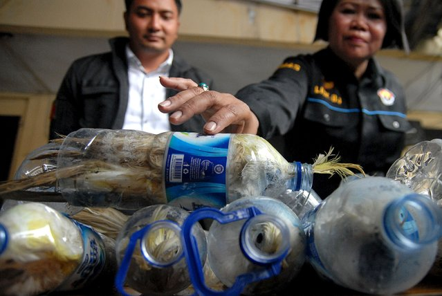 A police officer holds a water bottle which with a yellow-crested cockatoo put inside for illegal trade at the customs office of Tanjung Perak port in Surabaya, East Java province, Indonesia, May 4, 2015 in this picture taken by Antara Foto. (Photo by Risyal Hidayat/Reuters/Antara Foto)