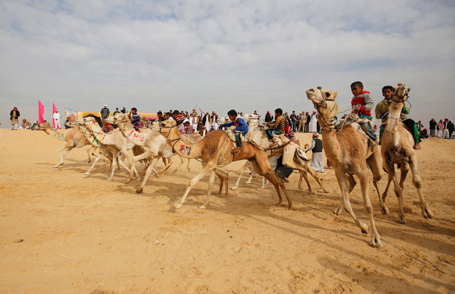 Jockeys, most of whom are children, compete on their mounts at the starting line during the opening of the International Camel Racing festival at the Sarabium desert in Ismailia, Egypt, March 21, 2017. (Photo by Amr Abdallah Dalsh/Reuters)