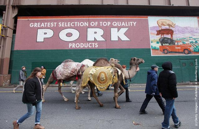 Three Kings Parade Held In New York