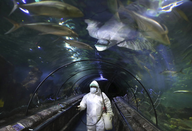 An employee in protective gears sprays disinfectant at the main exhibition tank at the Sea World at Jaya Ancol Dream Park as it is closed for public in the wake of coronavirus outbreak in Jakarta, Indonesia, Saturday, March 14, 2020. Indonesia's capital city announced a lockdown of all tourist destinations and entertainment spots as well as the closing all of its public schools for the next 14 days amid the global outbreak. For most people, the new coronavirus causes only mild or moderate symptoms. For some it can cause more severe illness. (Photo by Dita Alangkara/AP Photo)