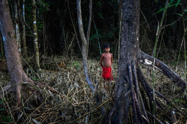 A Waiapi boy stands in the jungles while looking for wood for a fire pit at the Manilha village in the Waiapi indigenous reserve in Amapa state in Brazil on October 13, 2017. (Photo by Apu Gomes/AFP Photo)