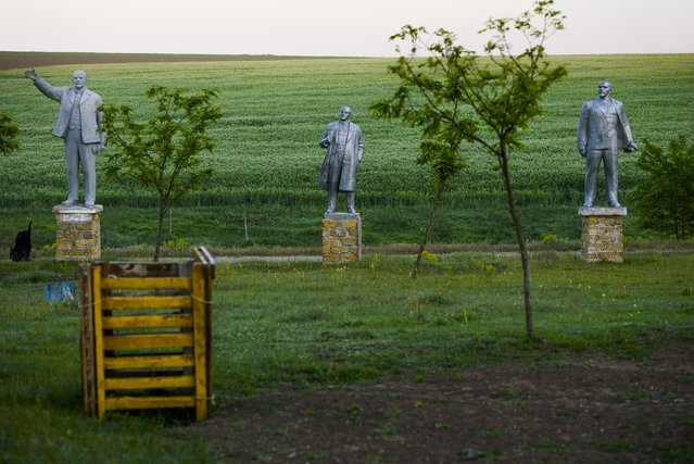 In this photo taken on Wednesday, October 25, 2017, statutes of Vladimir Lenin are displayed in a field in the village of Frumushika Nova where a local farmer set up a folk exhibition along with a collection of Soviet-era monuments. (Photo by Olga Ivashchenko/AP Photo)