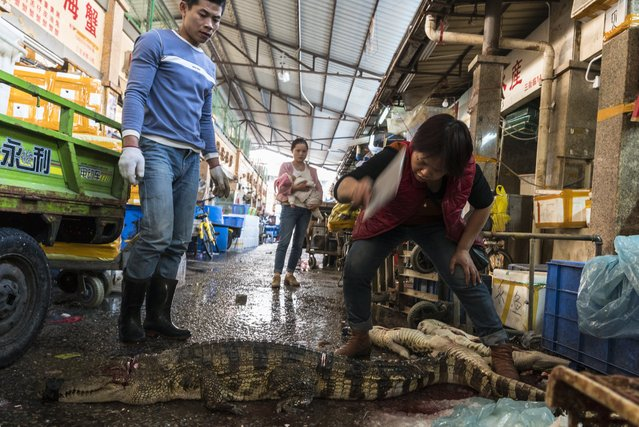 A woman kills purchased crocodile on Huangsha Seafood Market in Guangzhou, Guandong Province, China, 22 January 2018. (Photo by Aleksandar Plavevski/EPA/EFE)