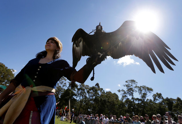An Australian Wedge Tailed Eagle is put on display as part of the birds of prey exhibit at the St Ives Medieval Fair in Sydney, one of the largest of its kind in Australia, September 24, 2016. (Photo by Jason Reed/Reuters)