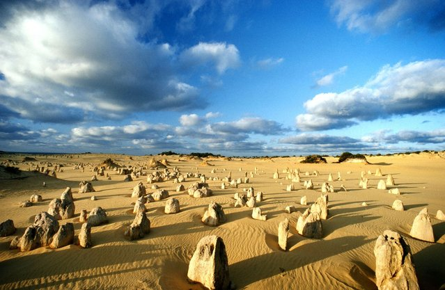 The peculiar pinnacles at Nambung National Park, Western Australia – These amazing natural limestone structures, some standing as high as five metres, were formed approximately 25,000 to 30,000 years ago after the sea receded and left deposits of sea shells. Over time, coastal winds removed the surrounding sand leaving the pillars exposed. (Photo by Jean Paul Ferrero/Ardea/Caters News)