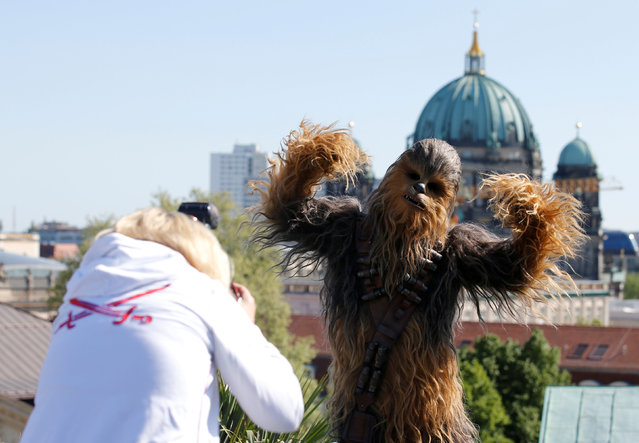 """A person dressed up as Chewbacca character poses during a photocall to promote the new Star Wars Movie """"Solo: A Star Wars Story"""" in Berlin, Germany, May 4, 2018. (Photo by Axel Schmidt/Reuters)"""