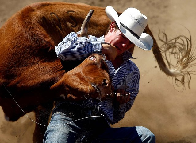 Dalton Massey competes in the steer wrestling event during the Yoncalla Rodeo in Yoncalla, Oregon, on July 4, 2013. (Photo by Michael Sullivan/The News-Review)