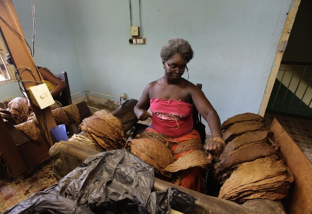 "A woman sorts tobacco leaves at the Cohiba cigar factory ""El Laguito"" in Havana September 10, 2012. (Photo by Desmond Boylan/Reuters)"