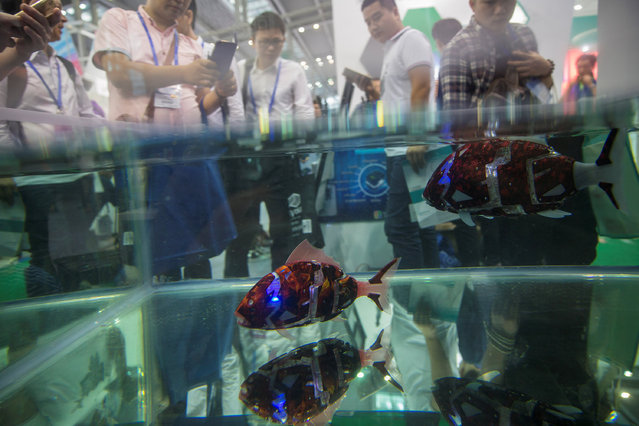 Fish robots swim in a pool during China Hi-Tech Fair in Shenzhen, China, November 16, 2016. (Photo by Reuters/Stringer)