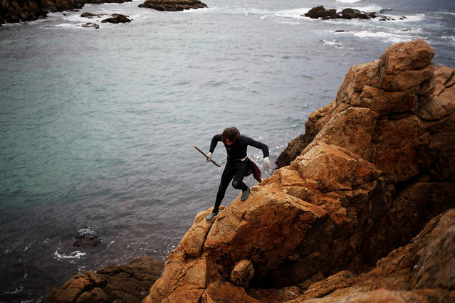 """Santi Diaz Mosquera, 41, a """"percebeiro"""" (barnacle fisherman), walks on rocks before collecting barnacles on the coast of Ferrol, in the northwestern Spanish region of Galicia, December 15, 2016. (Photo by Nacho Doce/Reuters)"""