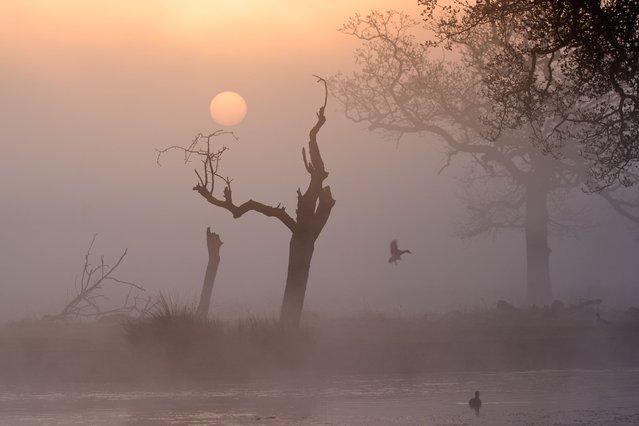 The sun rises on a misty morning at Bushy Park, London, United Kingdom on Monday, April 19, 2021. (Photo by John Walton/PA Images via Getty Images)