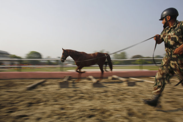In this April 3, 2019, photo, a Nepalese army soldier trains his horse for Ghode Jatra festival in Kathmandu, Nepal. (Photo by Niranjan Shrestha/AP Photo)