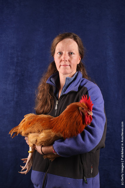 Helen McSherry, from Shropshire, holds her 6 month old Lincolnshire Buff Cockerel