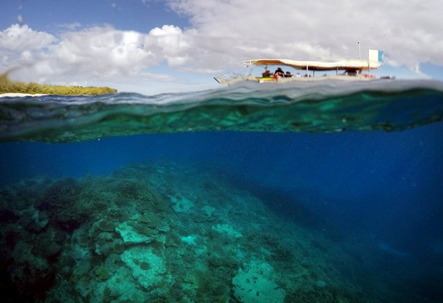 "A boat carrying tourists floats above an area called the ""Coral Gardens"" near Lady Elliot Island, north-east of the town of Bundaberg in Queensland, Australia, June 10, 2015. (Photo by David Gray/Reuters)"